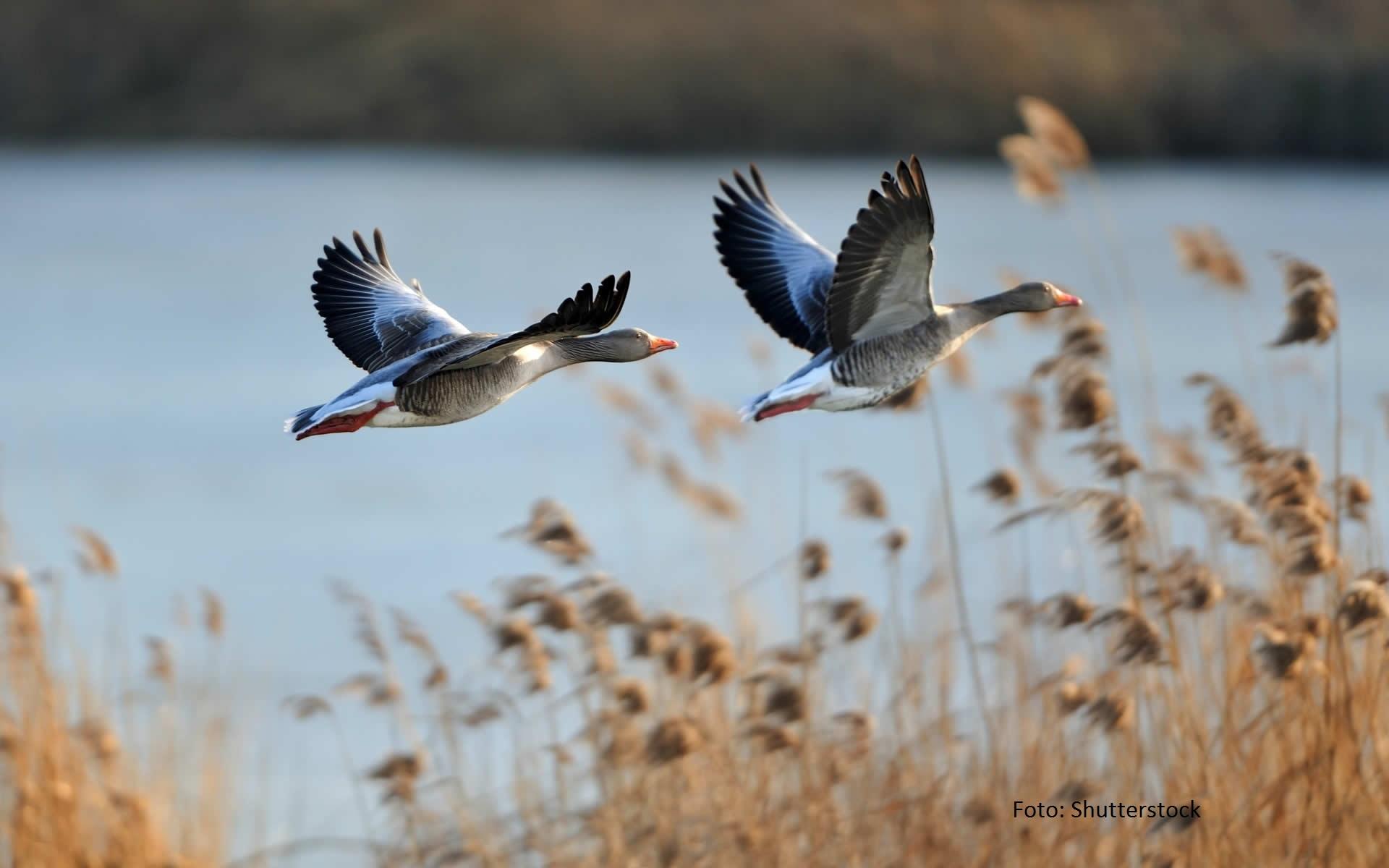 Ptasi raj