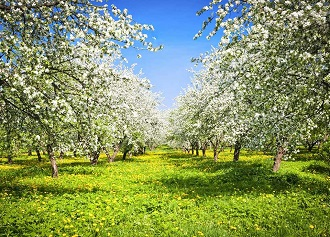 Najpiękniejsze miejsca na wiosnę