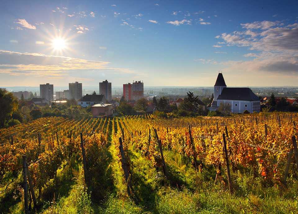 Słowacja - szlak winny