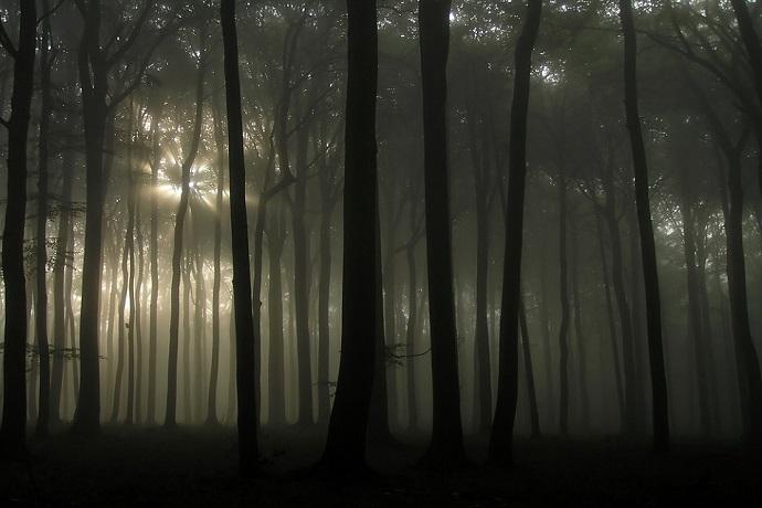 Nawiedzone miejsca w Polsce - Las w Witkowicach