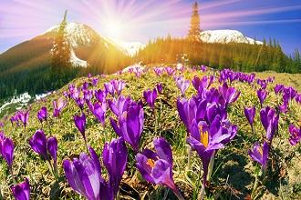Najpiękniejsze parki narodowe na wiosnę