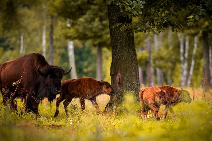 Top 10 miejsc w 2018 roku - Białowieski Park Narodowy