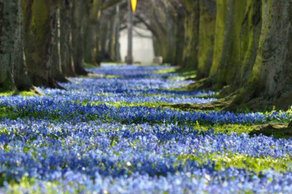 Wiosna w wielkim mieście – 10 idealnych miejsc na piknik