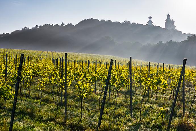 Kulinarna podróż po Polsce - winnice