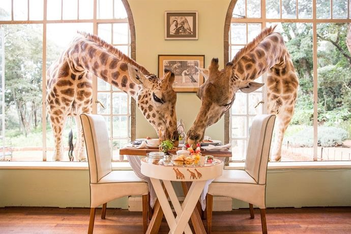 Najdziwniejsze hotele na świecie: Giraffe Manor Hotel, Kenia