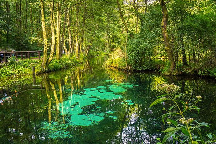 Niezwykłe atrakcje wodne w Polsce - Niebieskie Źródła, Dolina Pilicy