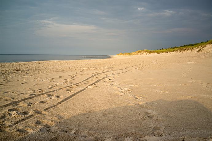 Polskie plaże bez tłoku - Kopalino