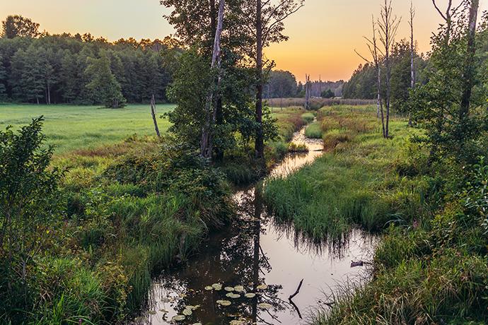 Najciekawsze lasy w Polsce - Puszcza Białowieska