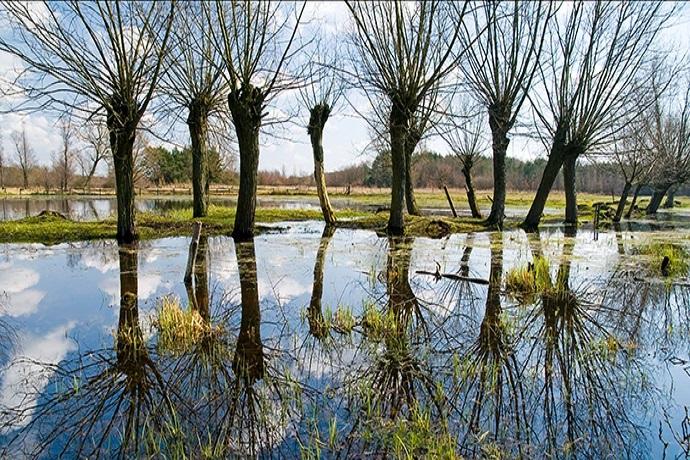 Najcieawsze lasy w Polsce - Puszcza Kampinoska