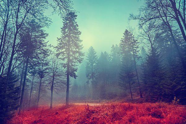 Miedzy ciszą a ciszą, czyli najciekawsze lasy w Polsce