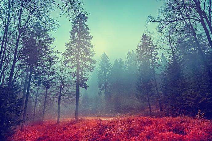 Najciekawsze lasy w Polsce - Magazyn Travelist